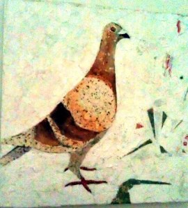 pigeon collage