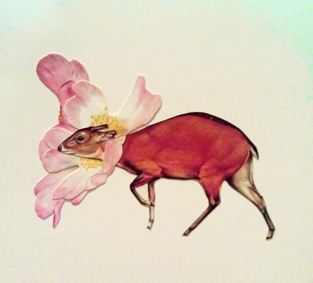 flowers mammal pink