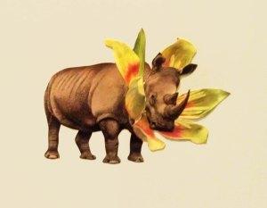 flowers rhino