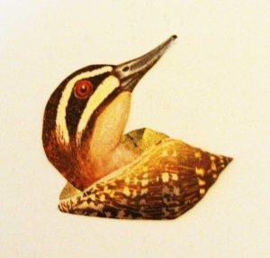 shell duck
