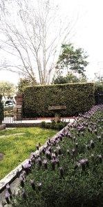 cettas garden 3