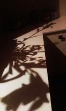 c shadow 2