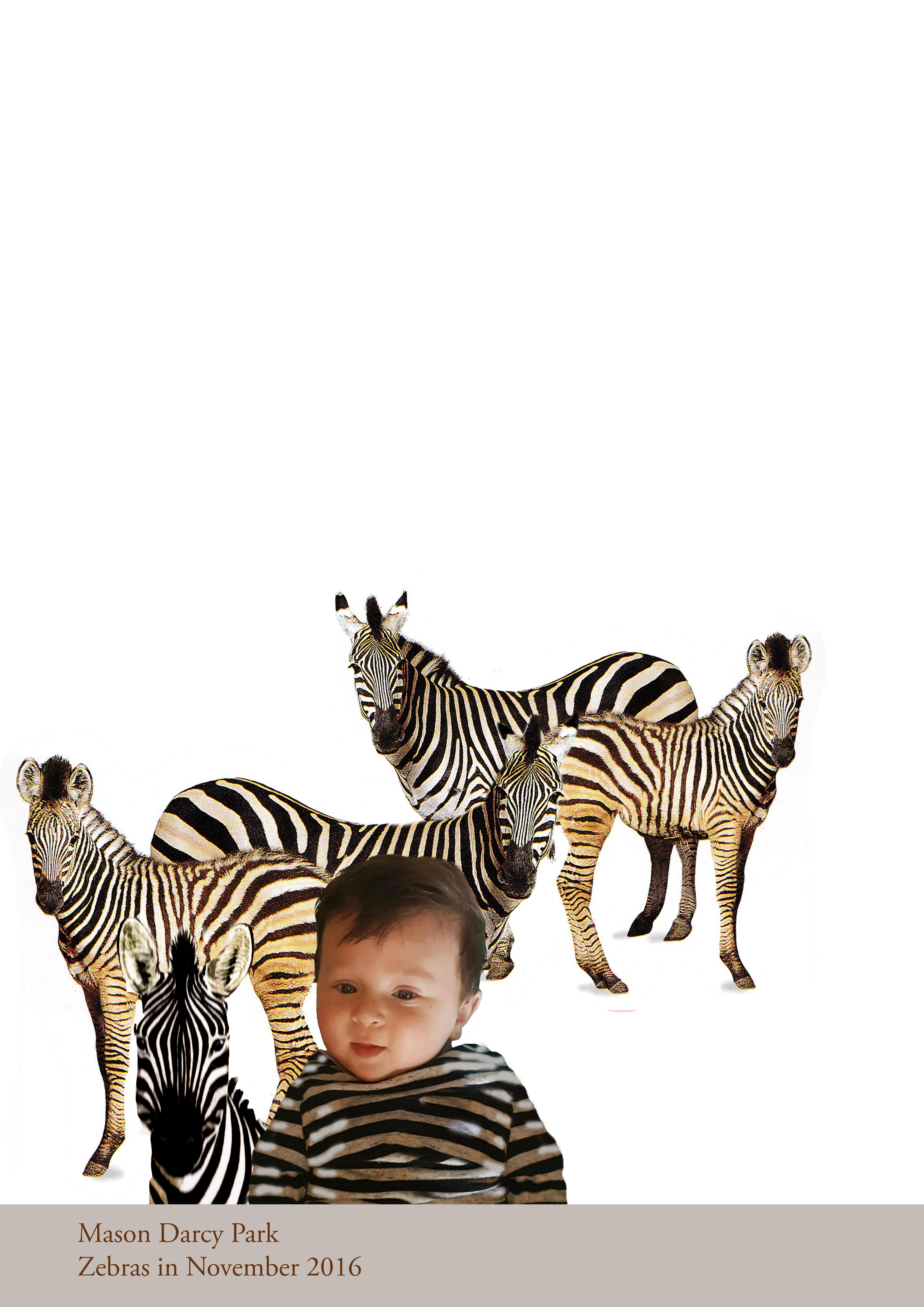 Zebras In November